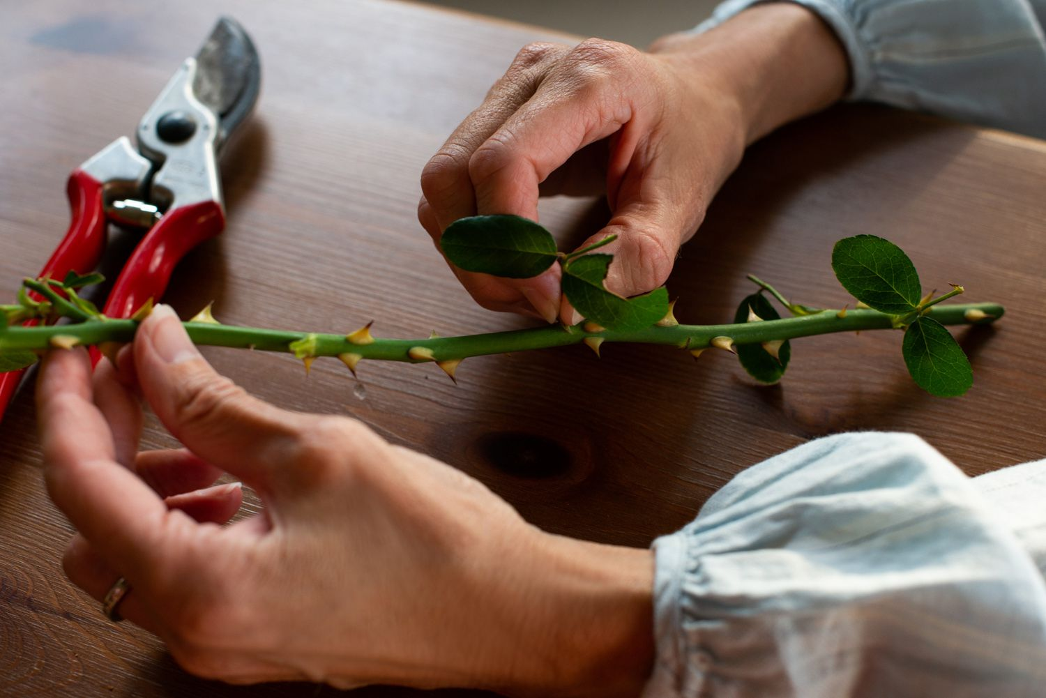 Removing leaves from a rose stem