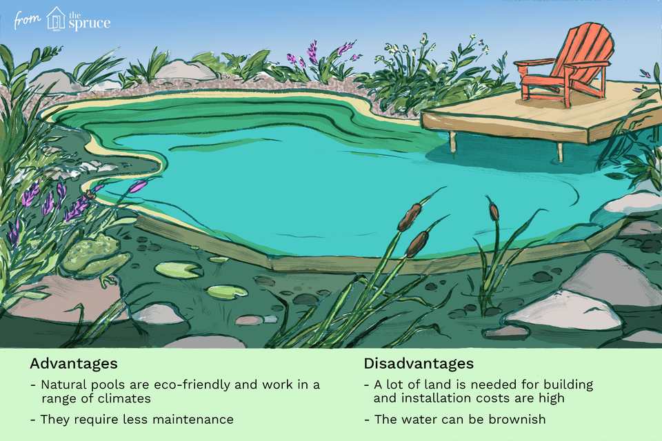 natural swimming pool illustration
