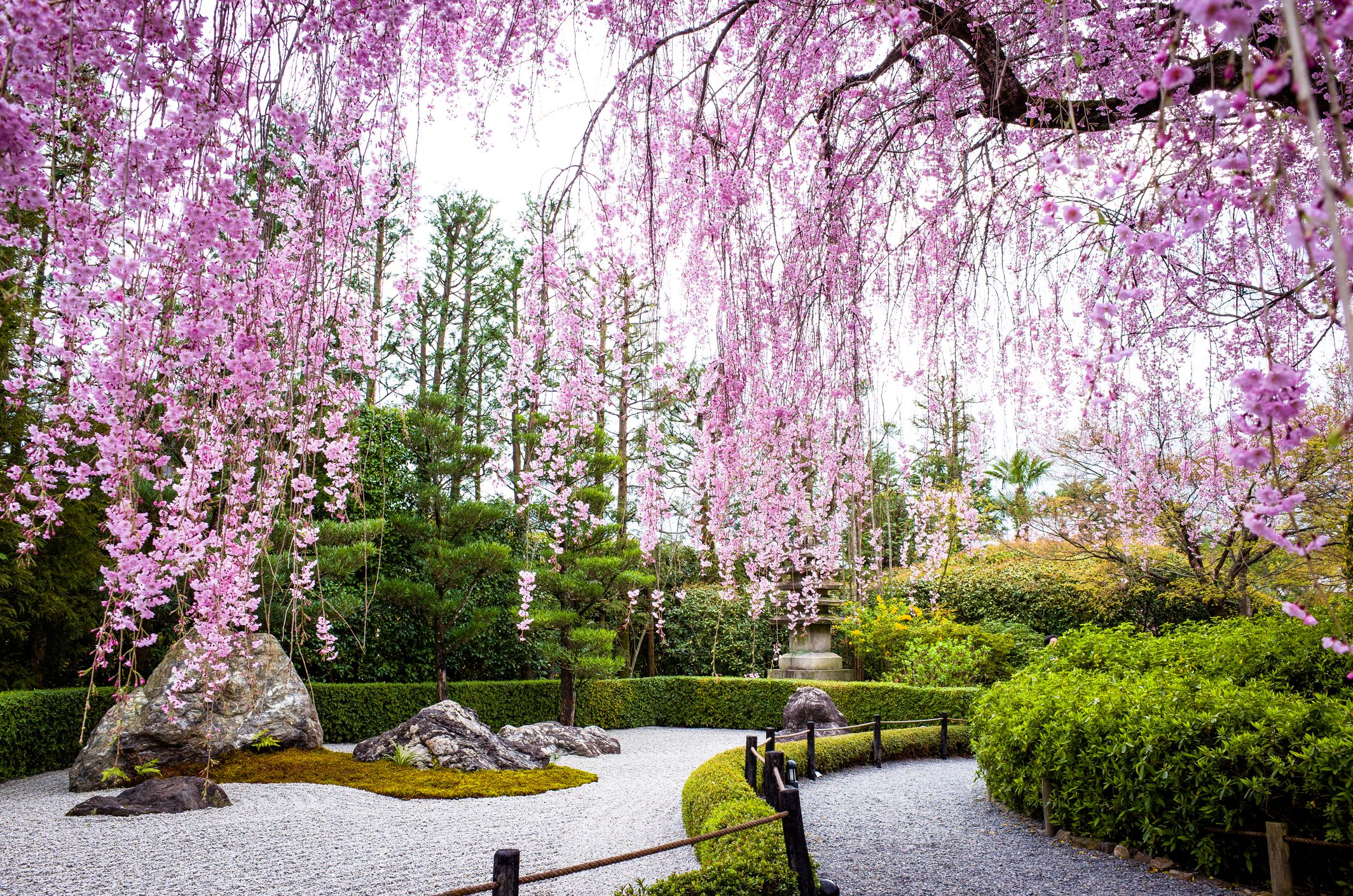 9 Traditional Japanese Plants For Your Garden