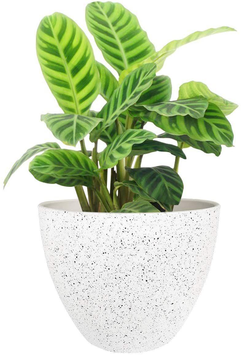 La Jolíe Muse Plant Pot with Drain Hole
