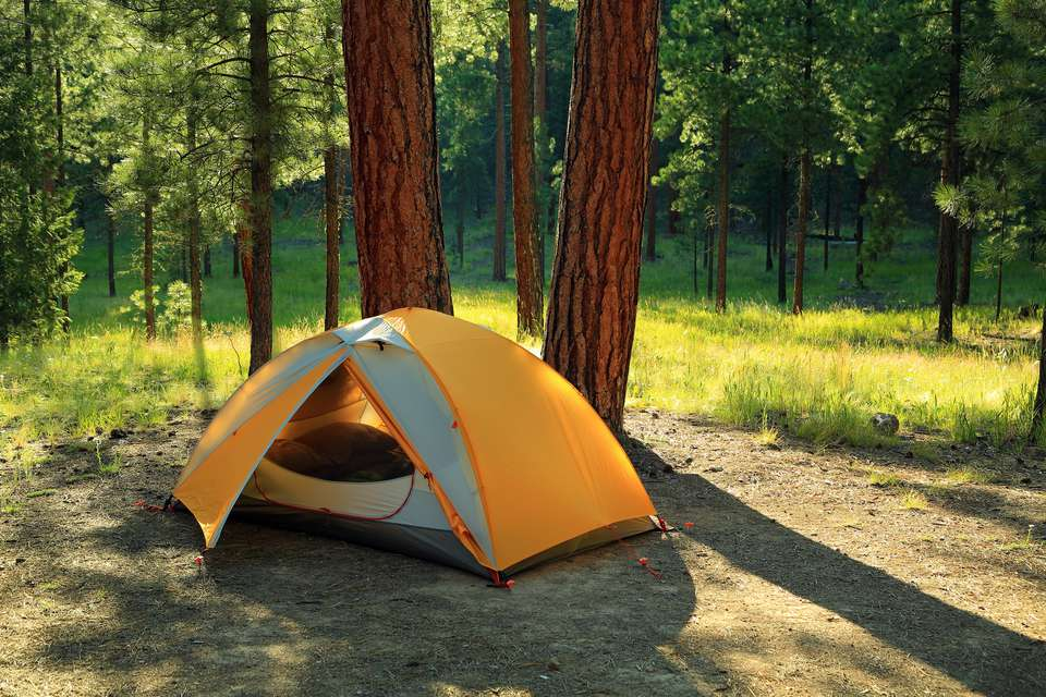 Yellow camping tent in woodlands