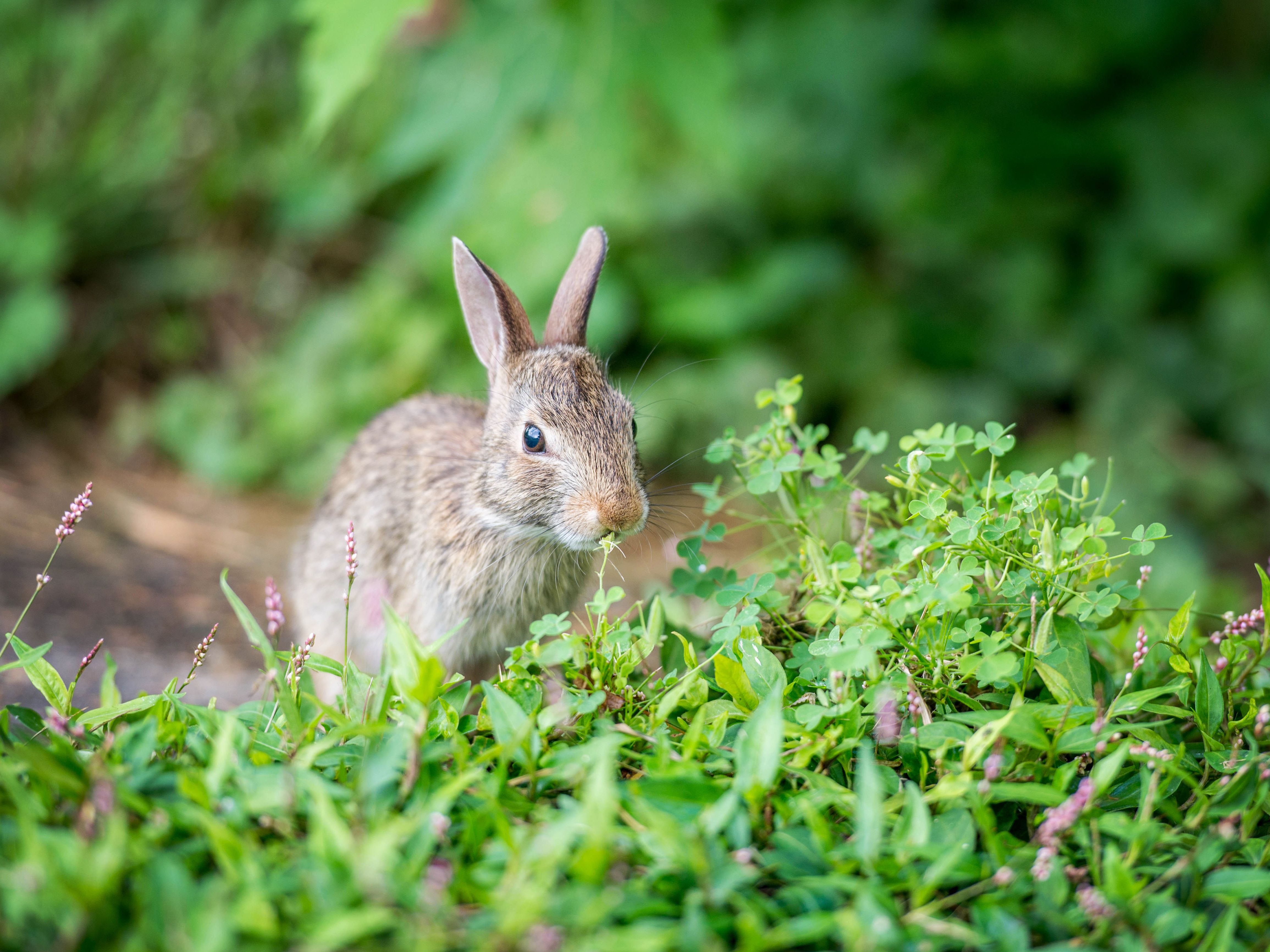 Plants Rabbits Will Not Eat