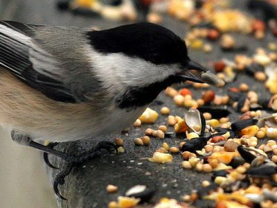 Do You Know The Best Birdseed For Your Backyard Birds