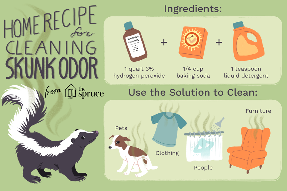 home recipe for cleaning skunk odor illustration