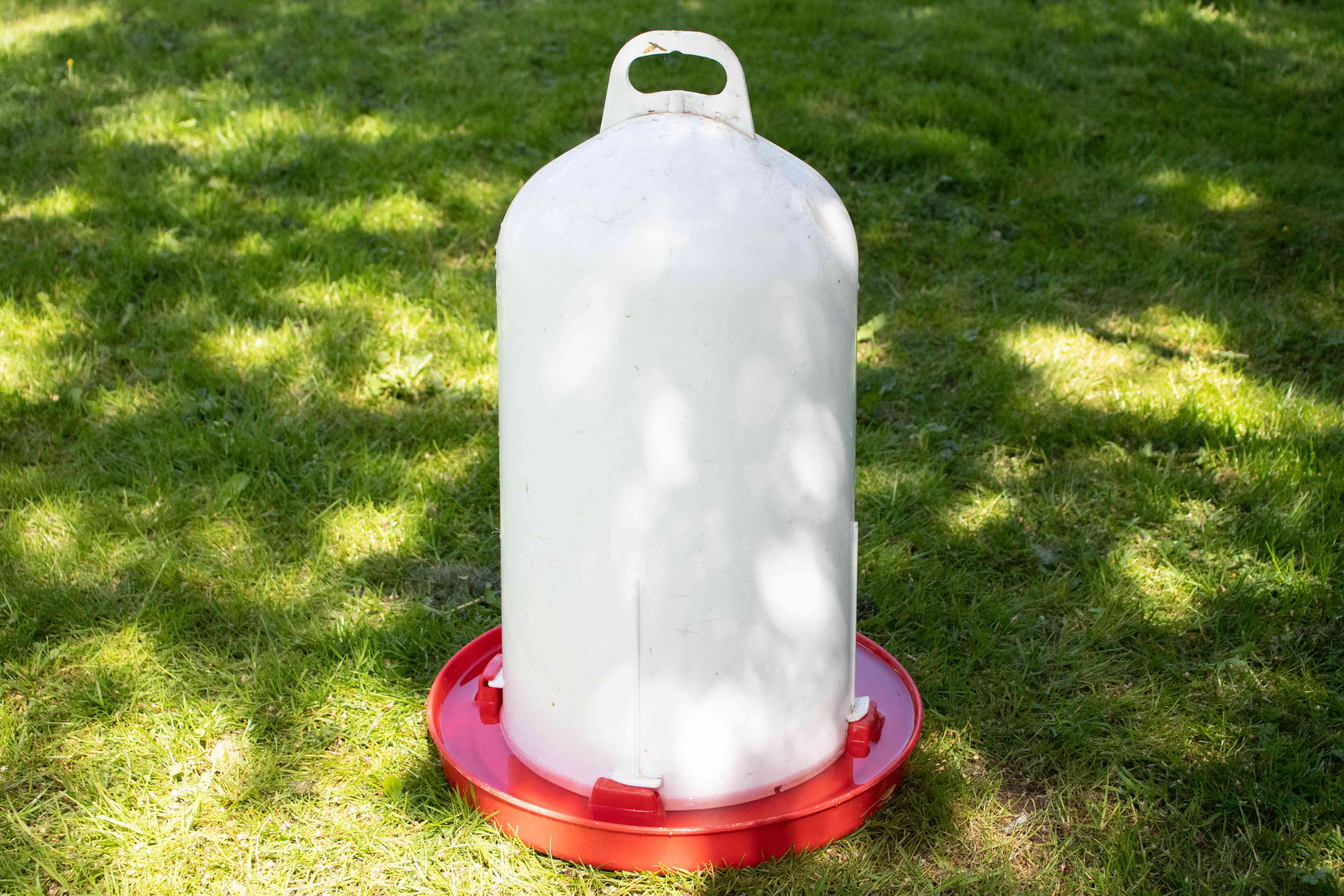 White and orange plastic water vessel for chickens on grass