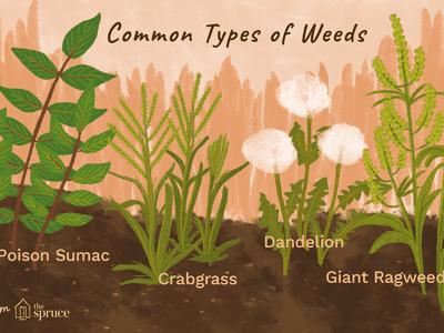 Identifying Common Poisonous Plants