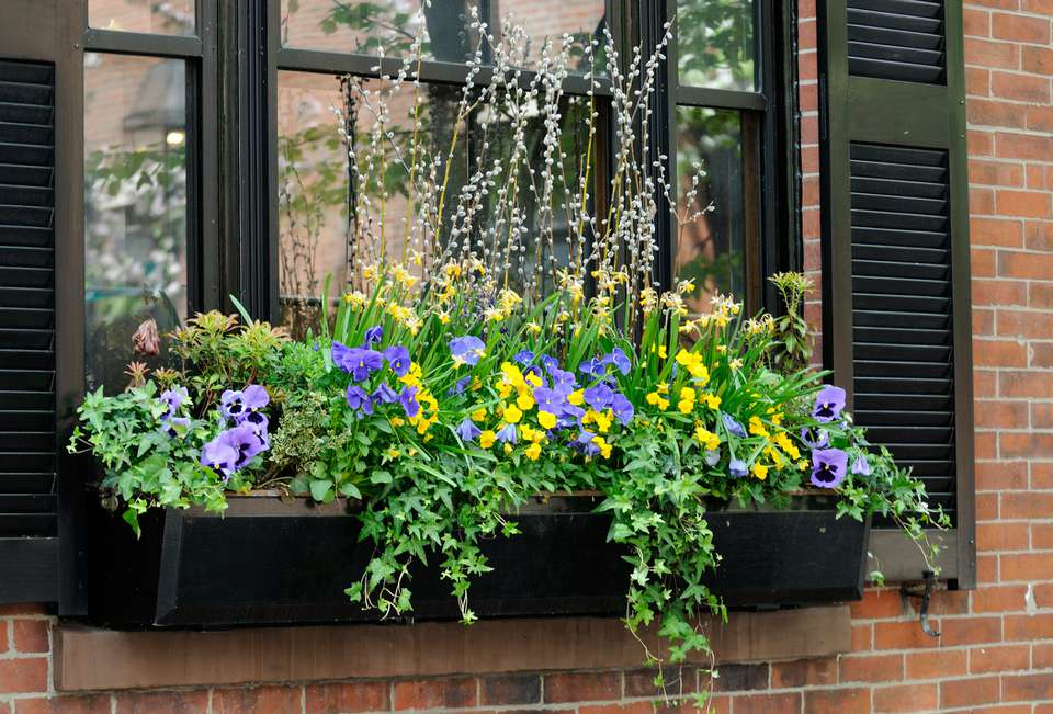 Elegant window box hanging outside a window with pansies