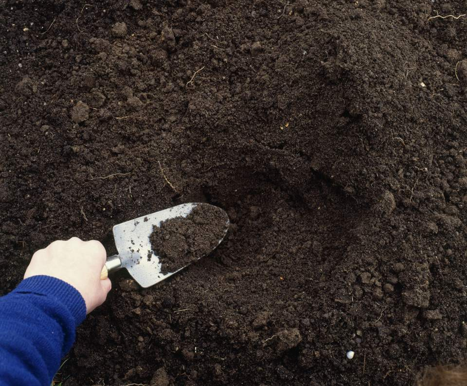 Taking a soil sample with a trowel.