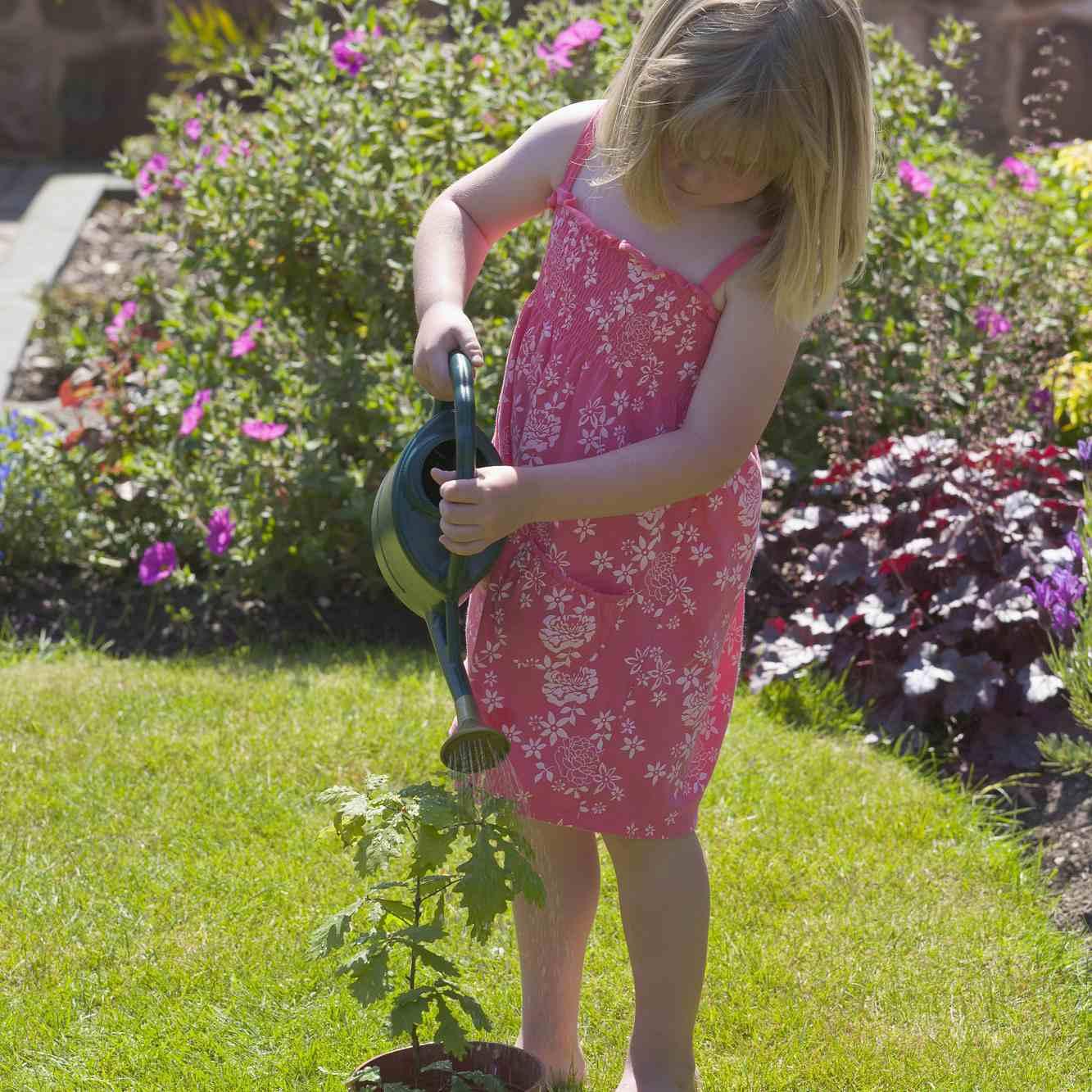girl watering small tree