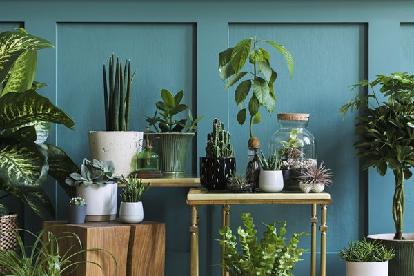 Stylish composition of home garden interior filled a lot of beautiful plants, cacti, succulents, air plant in different design pots