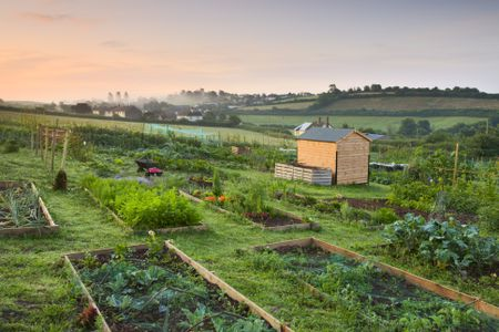 Homegrown Food In Your Backyard