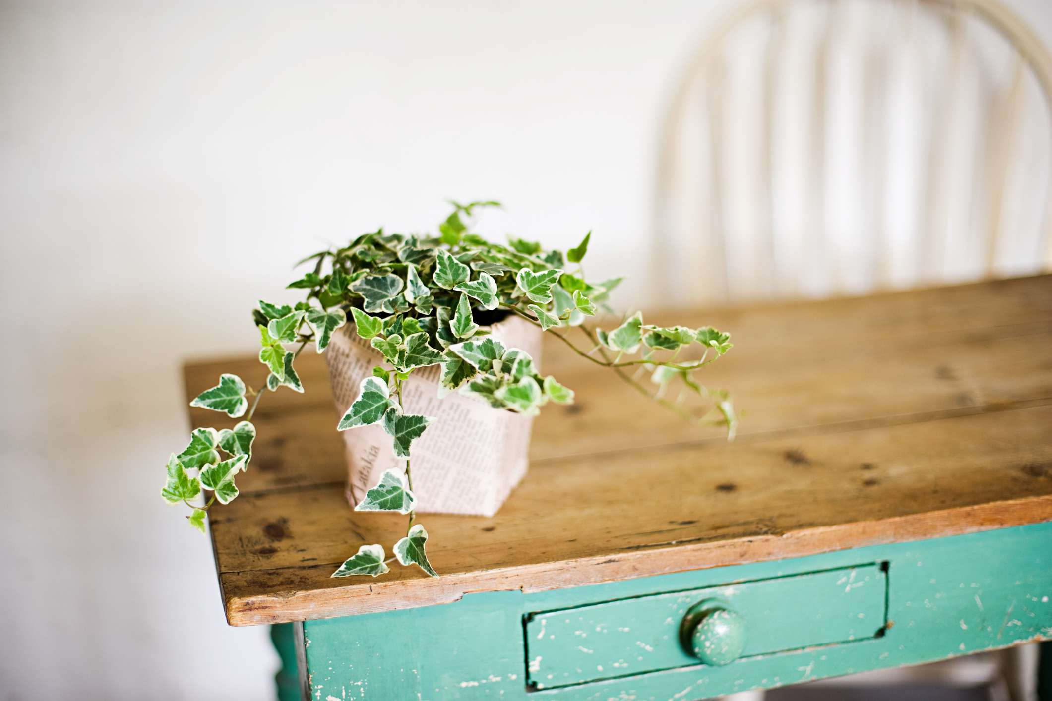 A pot of English Ivy sits on a wooden console table.