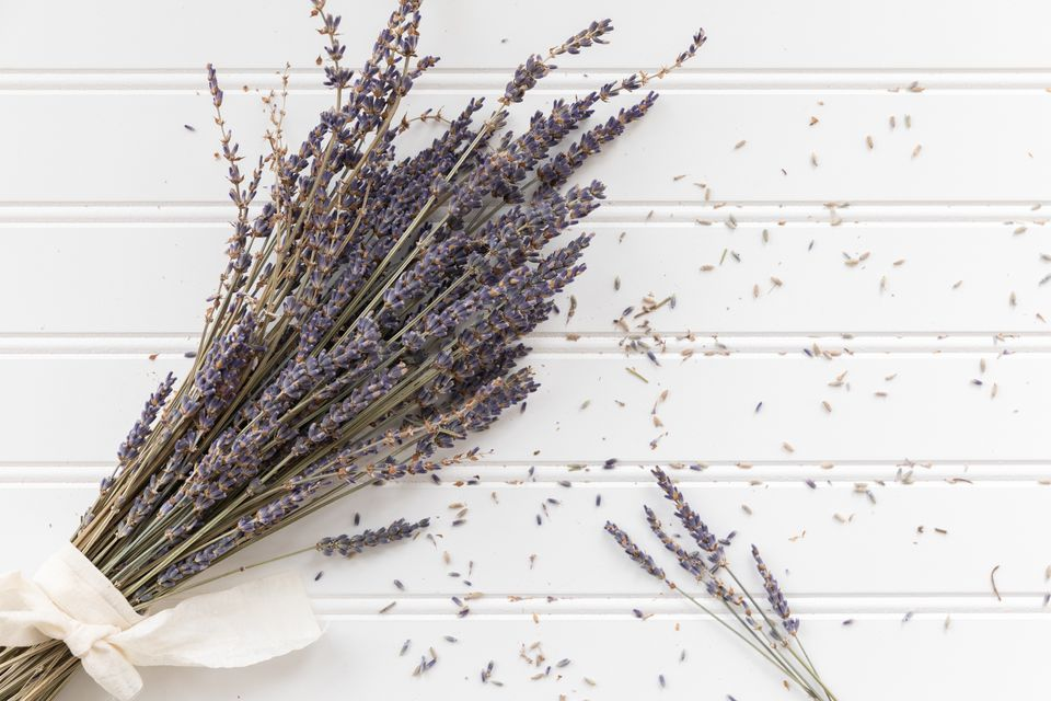 Lavender bunch with loose petals on white background