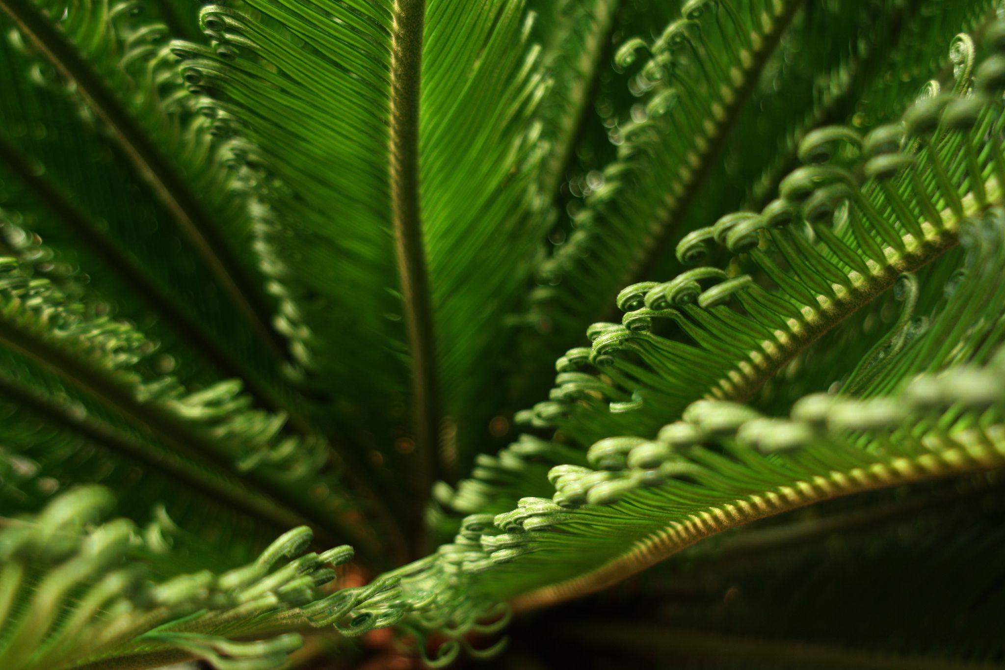 Interior Plants Houseplant
