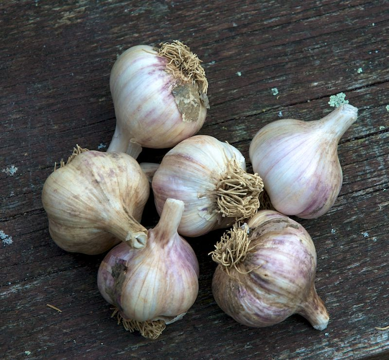 A picture of garlic bulbs on a wood surface