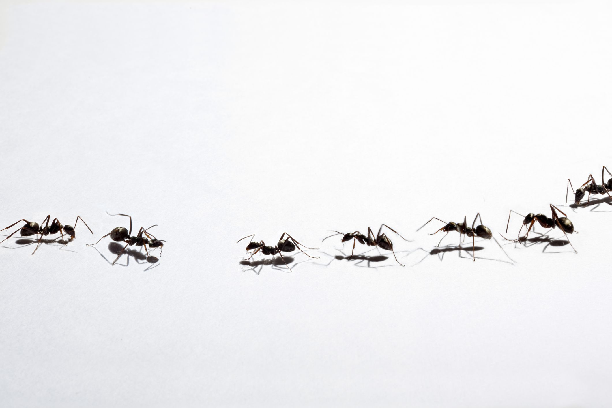 Tips for Ant Removal in Your Home