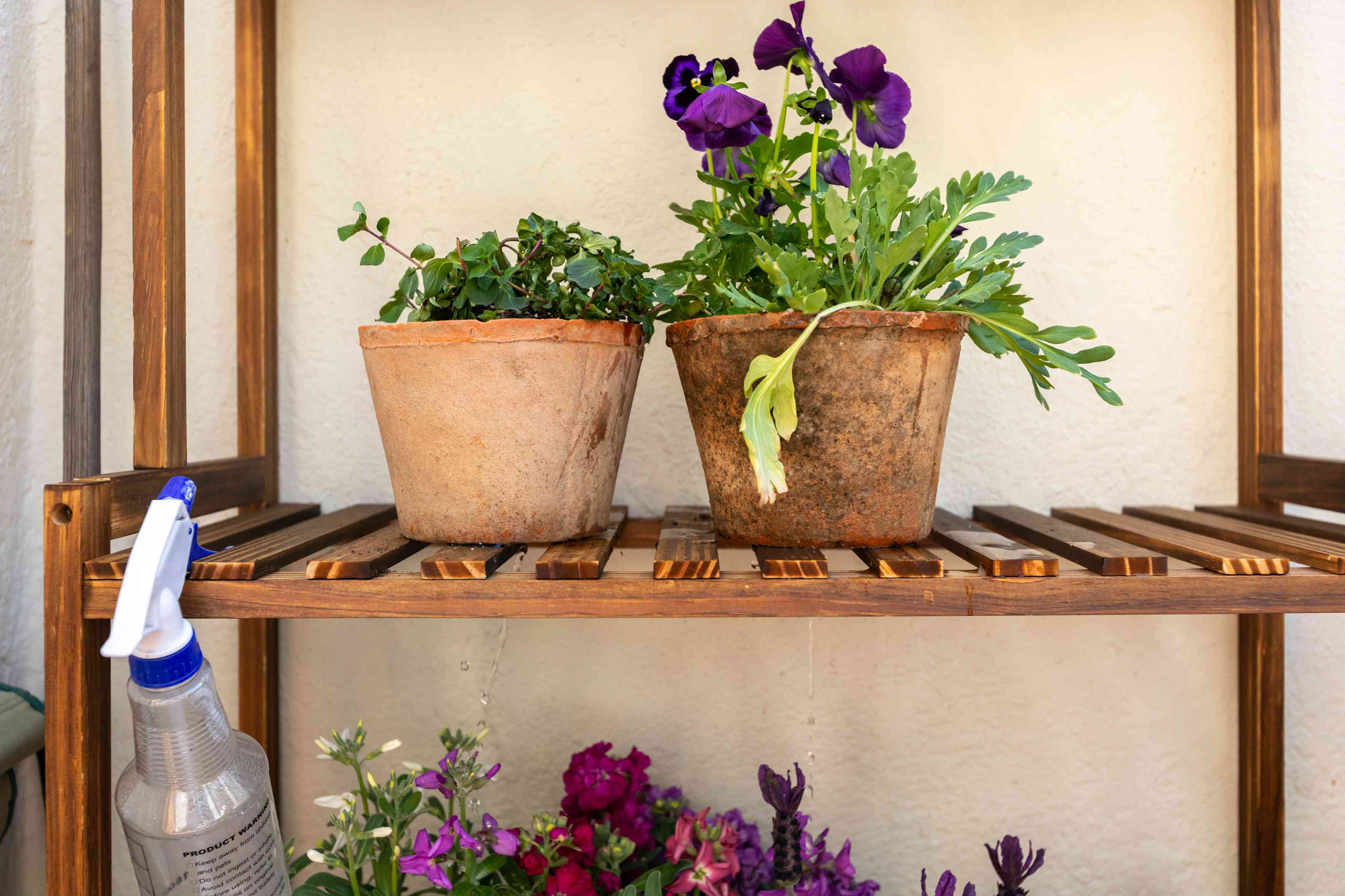 Plants in clay pots sitting on wooden plant stand with water bottle hanging in front