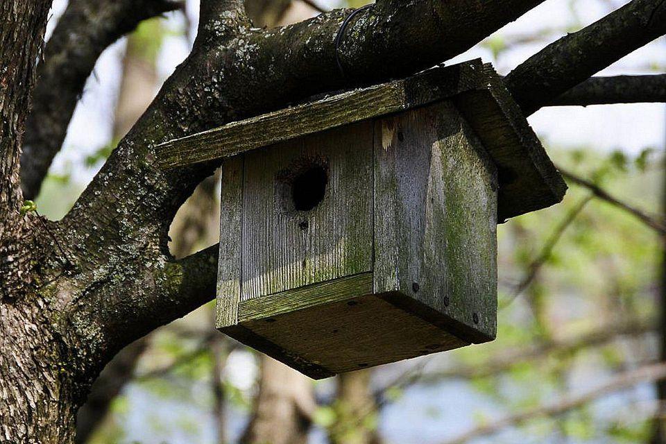 Simple Bird House