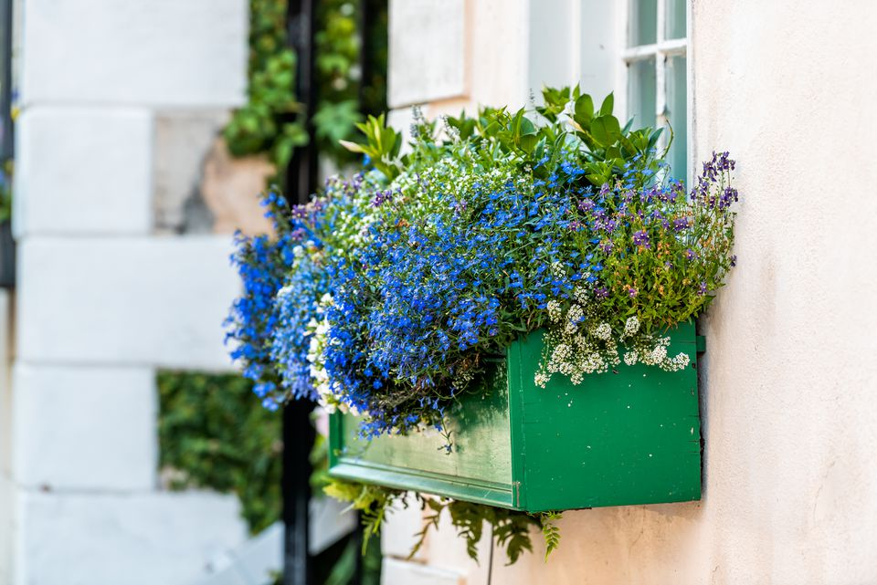 Window blue color flower basket box decoration on summer day with architecture in Charleston, South Carolina