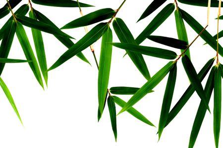 Pleasant Growing Bamboo Inside Interior Design Ideas Oteneahmetsinanyavuzinfo