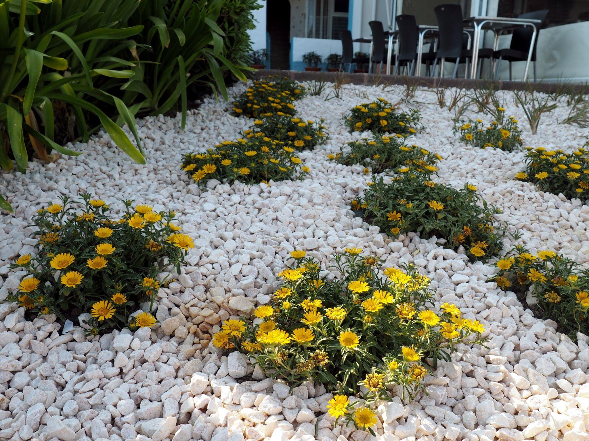 Yellow Rock Garden