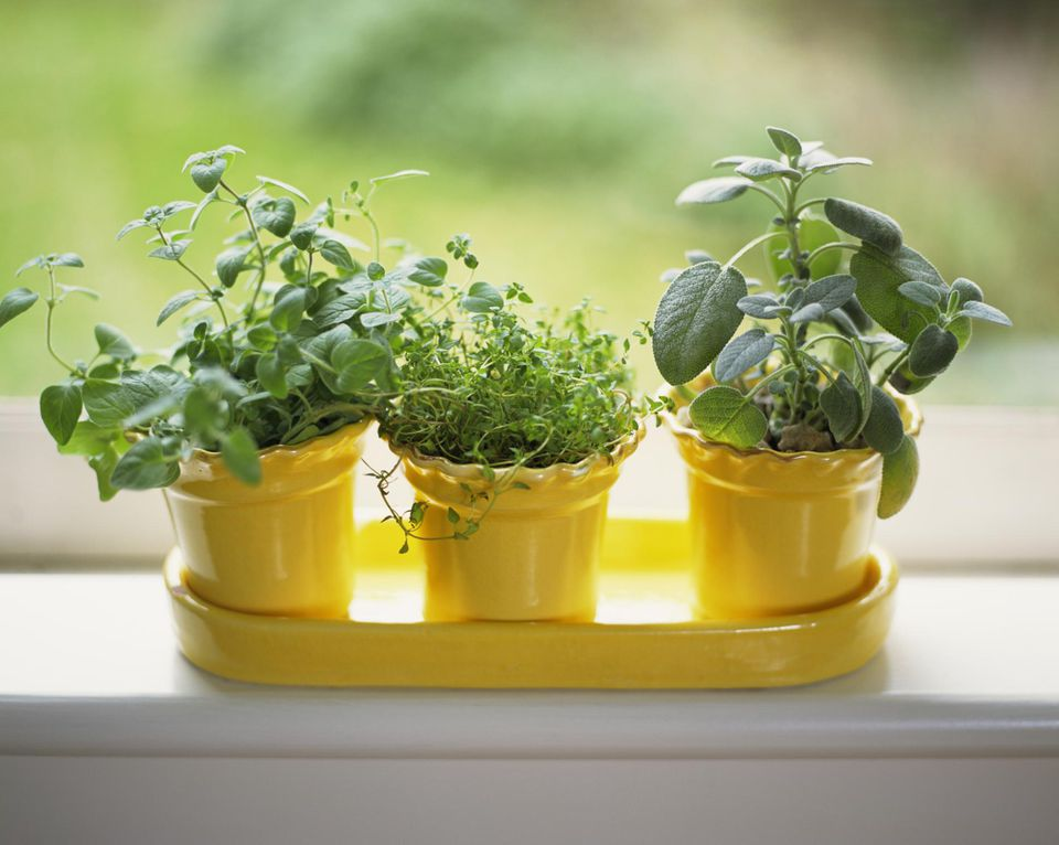 How To Grow Herbs Indoors On A Sunny Windowsill