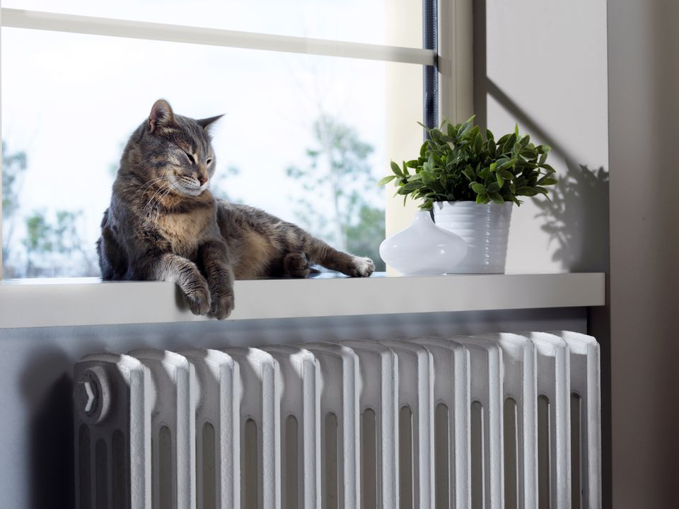Cat laying near radiator