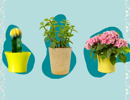 Best Plant Delivery Services