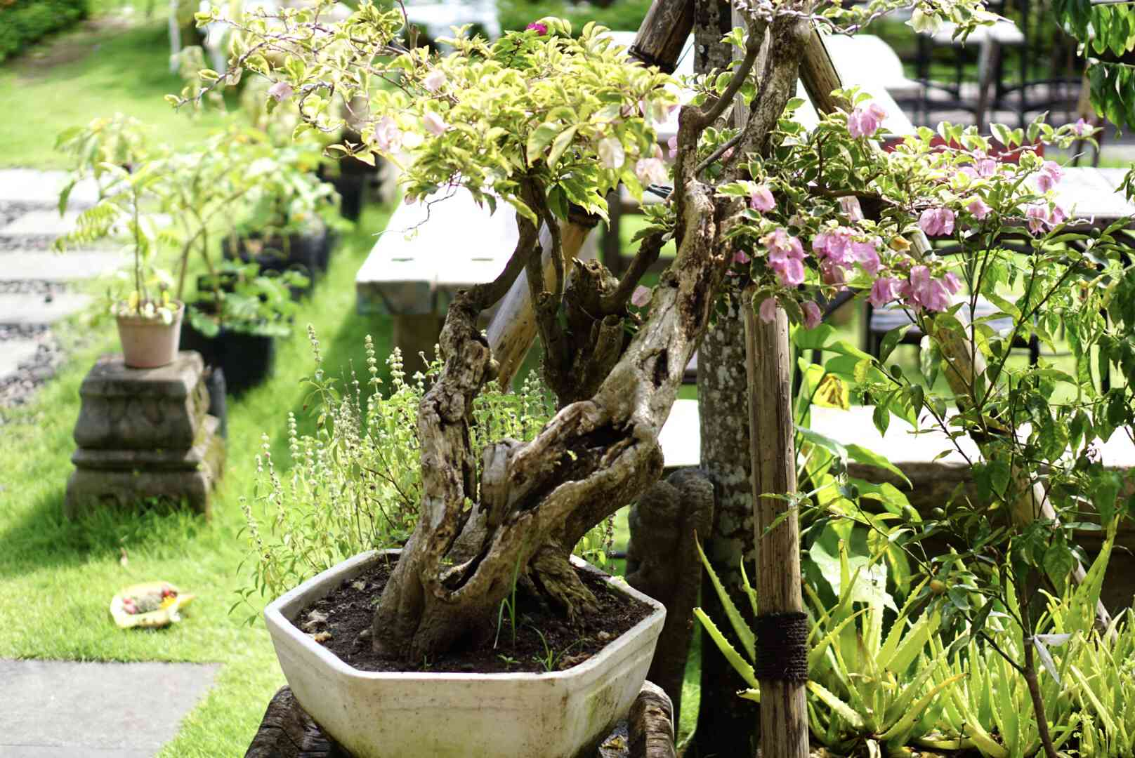 Container garden with flowering plant