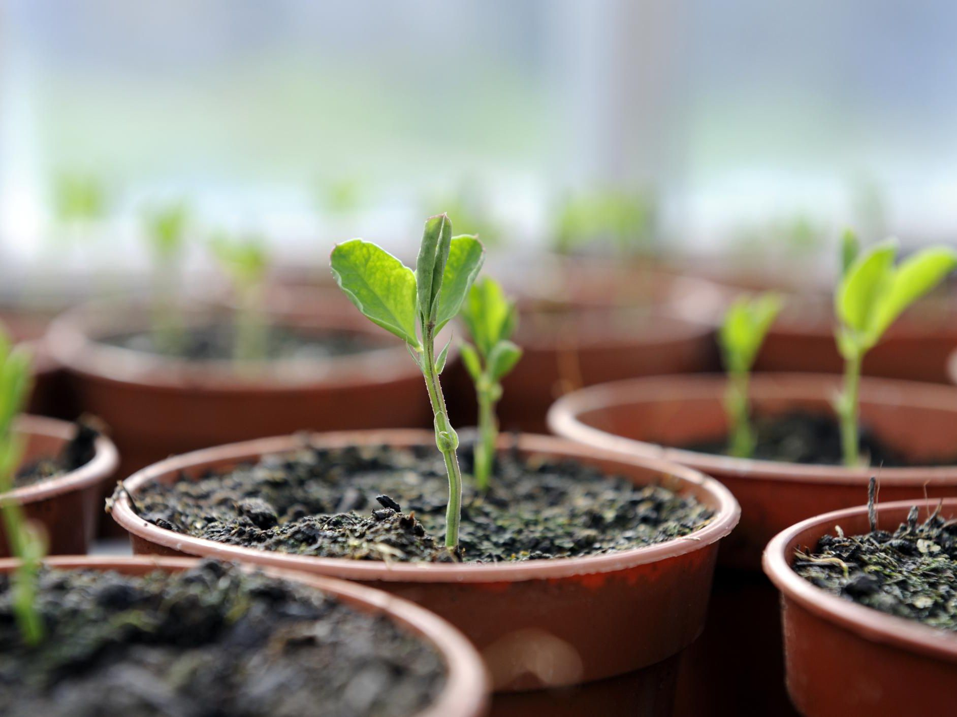 How to Care for Plant Seedlings