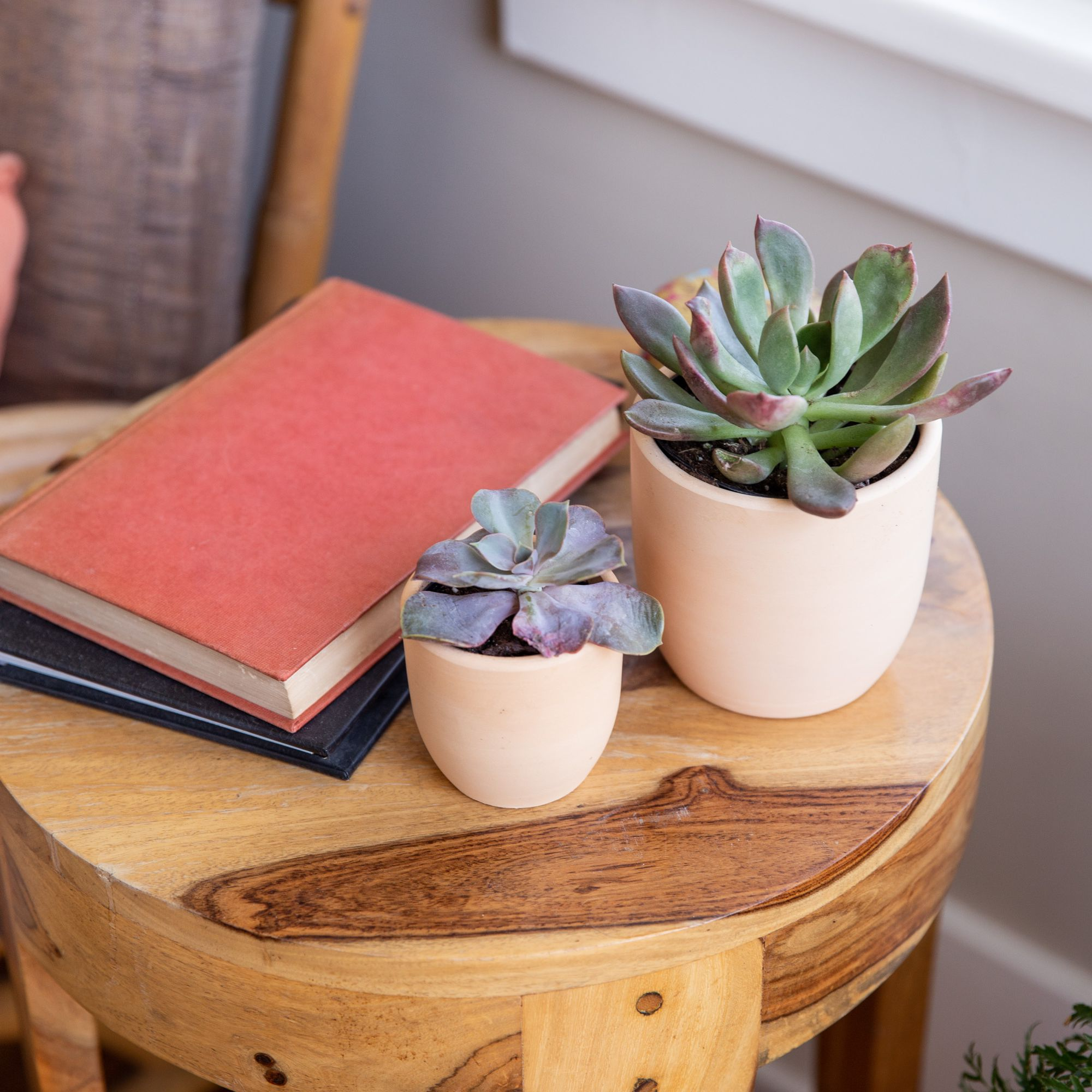 How To Grow And Care For Echeveria Succulents