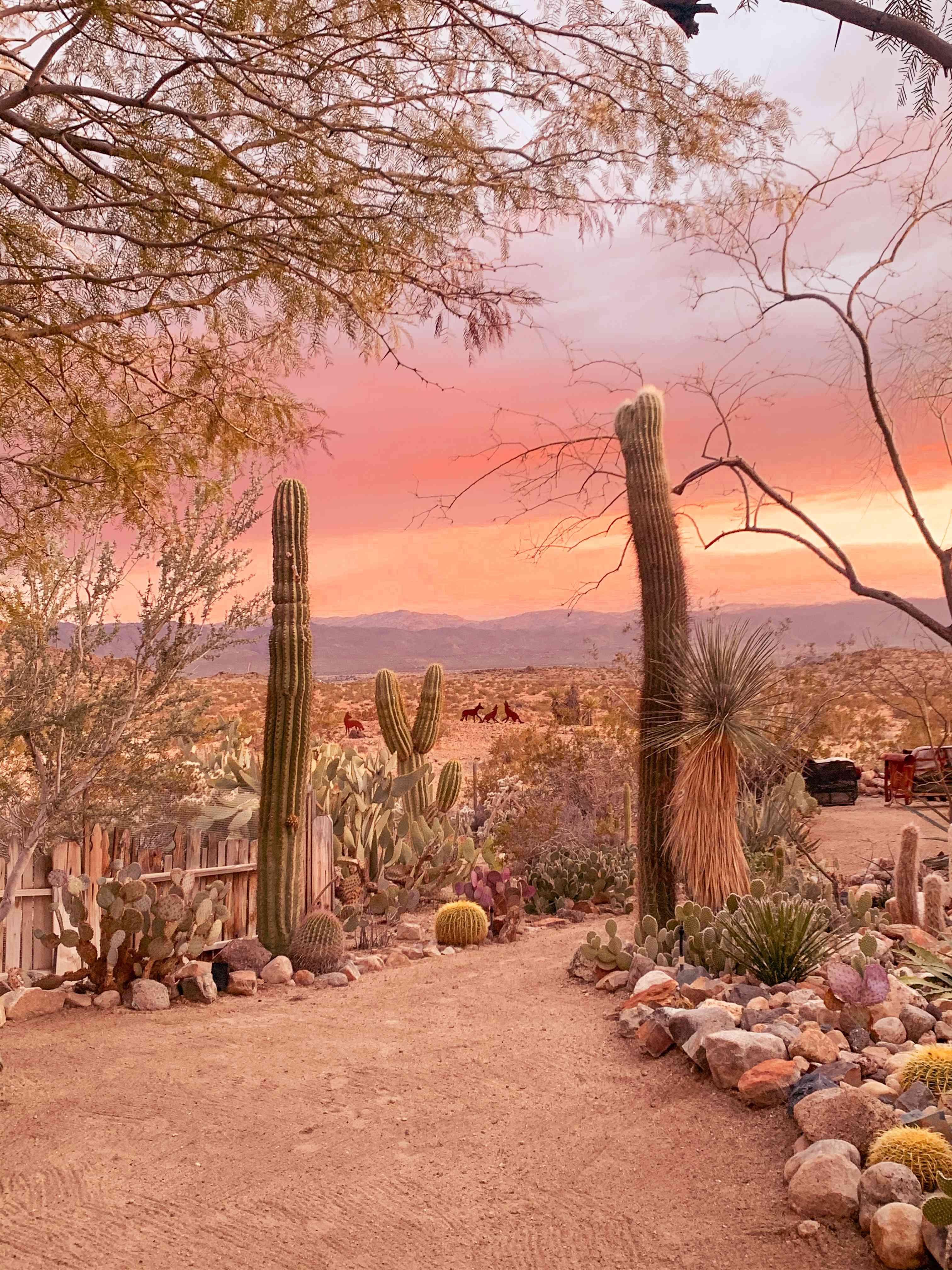 Cactus Garden, Joshue Tree House