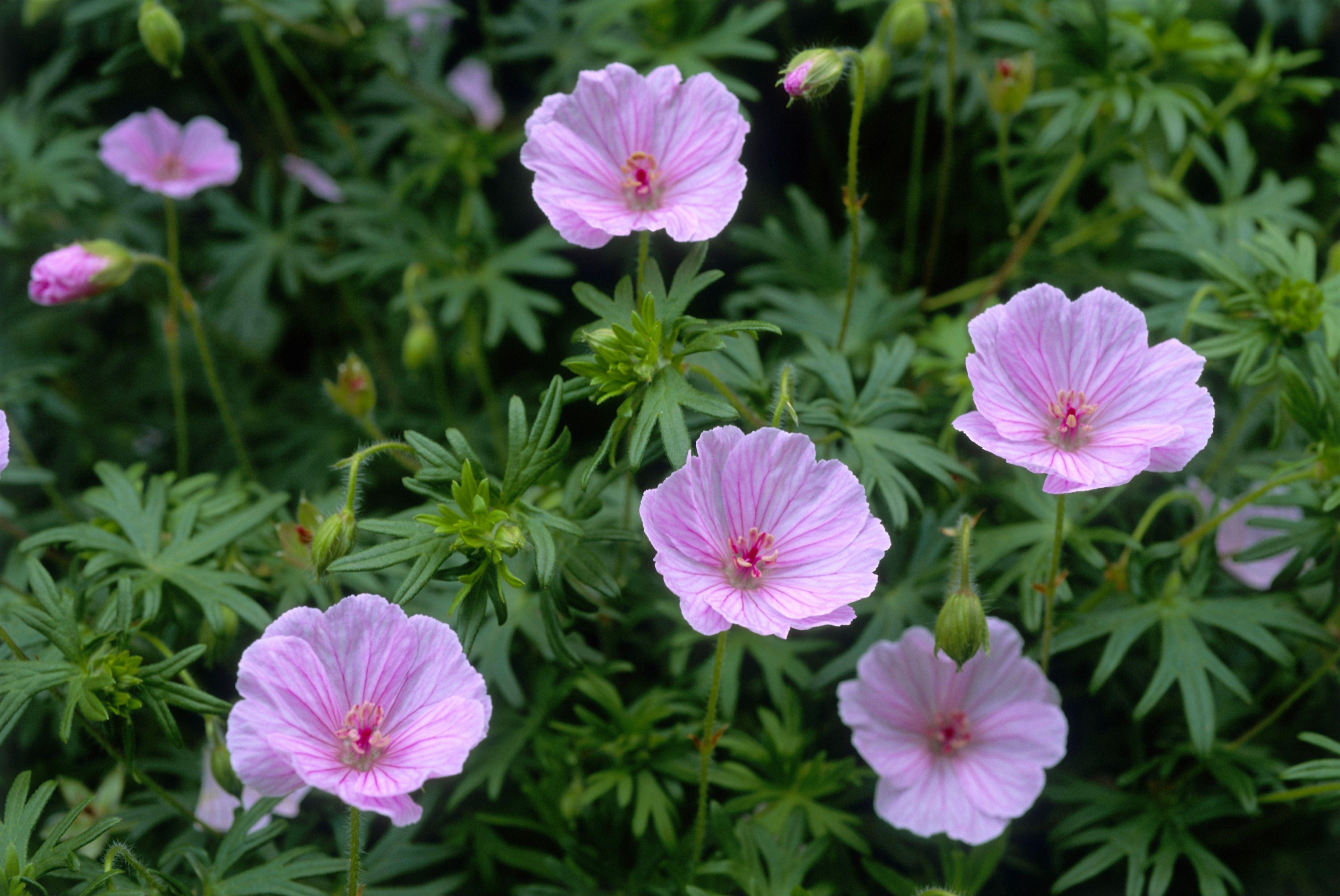 7 Flowers Bugs Won't Eat