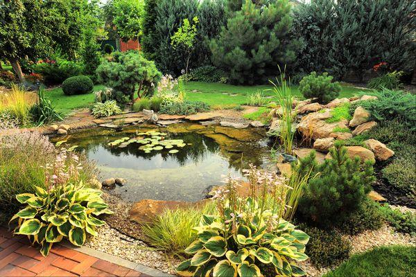 garden pond in backyard, attract amphibians to