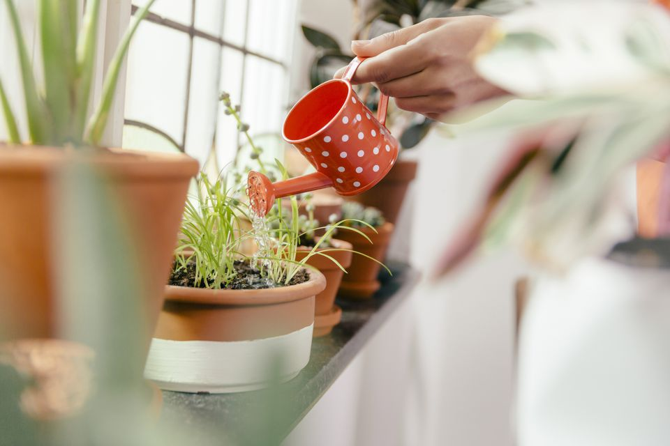 Watering plants on a window sill