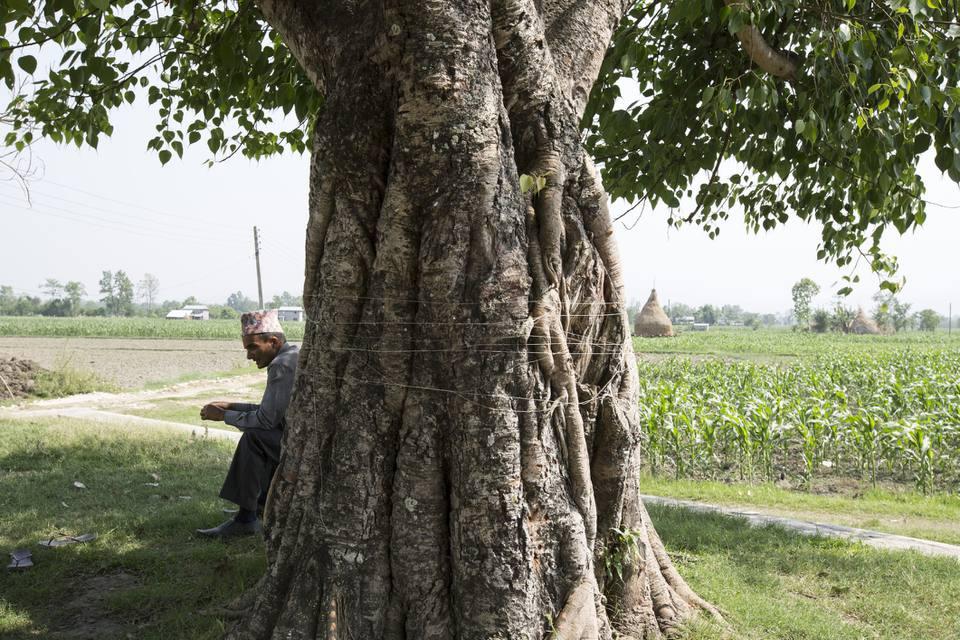 man sitting next to large tree