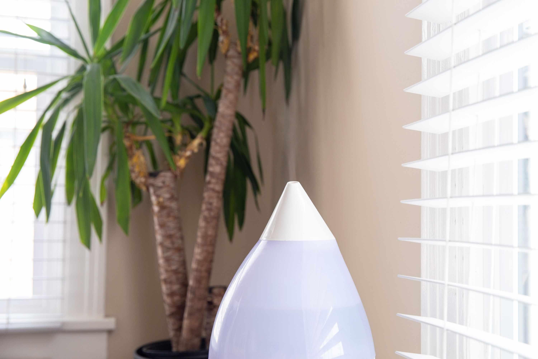 plant near a humidifier