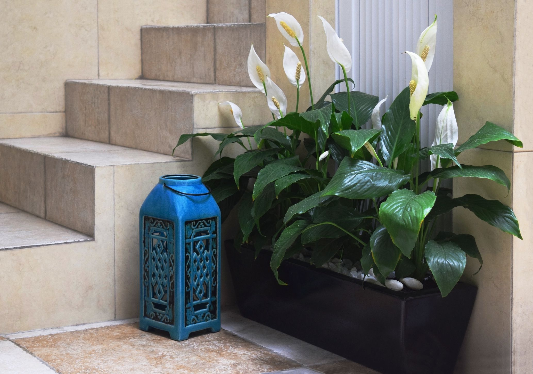 Top 8 easy care flowering houseplants izmirmasajfo