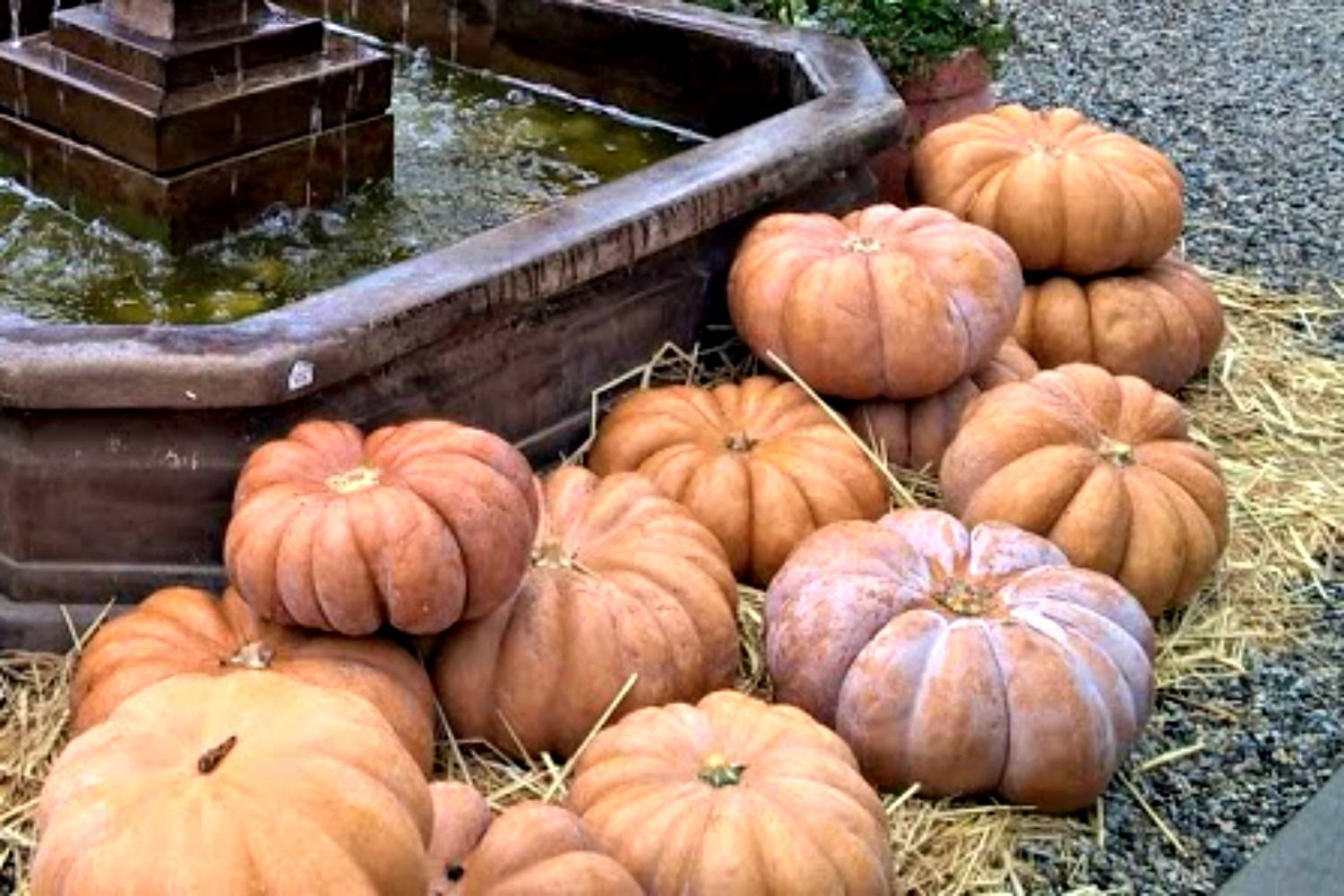 048e586fd4e8 A Guide to the Best Types of Pumpkins