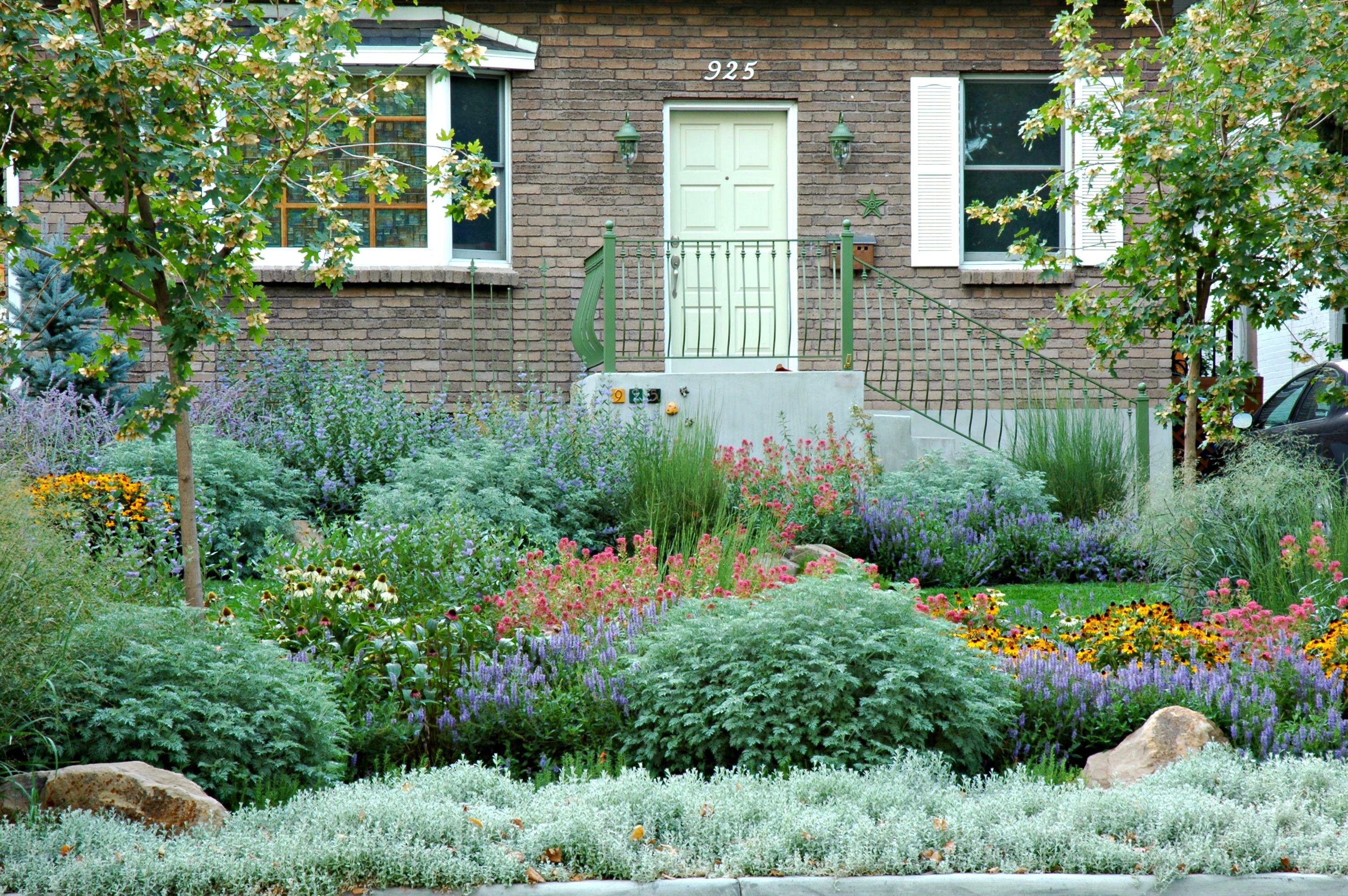 paisaje de pastos ornamentales