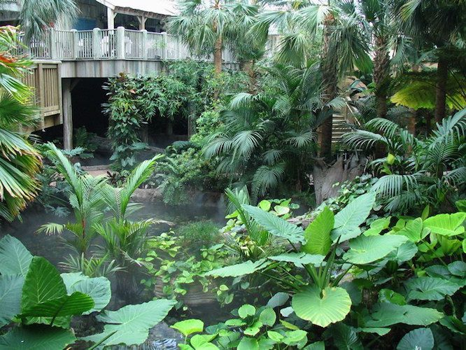 Large leafed tropical plants by a water feature