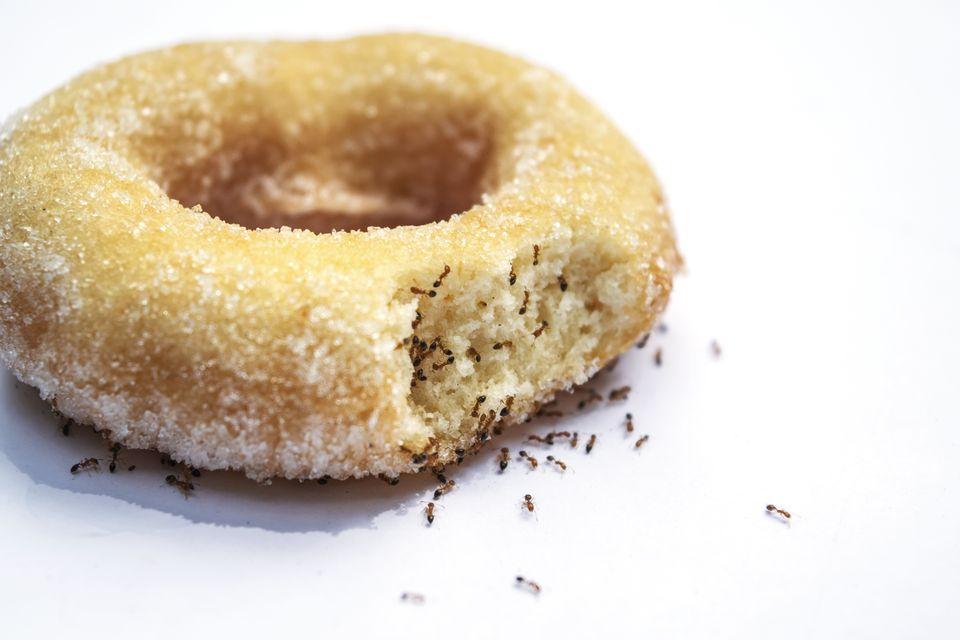 Ants Eating Donut