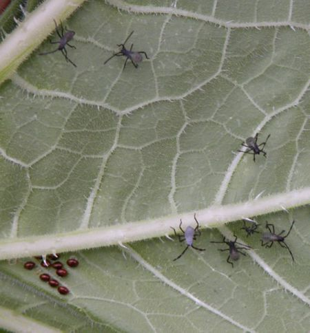 Identifying Plant Pests and Diseases