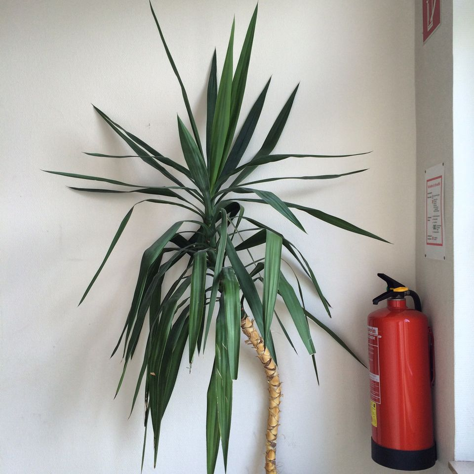 Potted Plant And Fire Extinguisher At Home