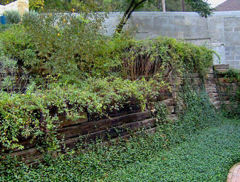 ground cover plants spilling over retaining wall built of old railroad ties