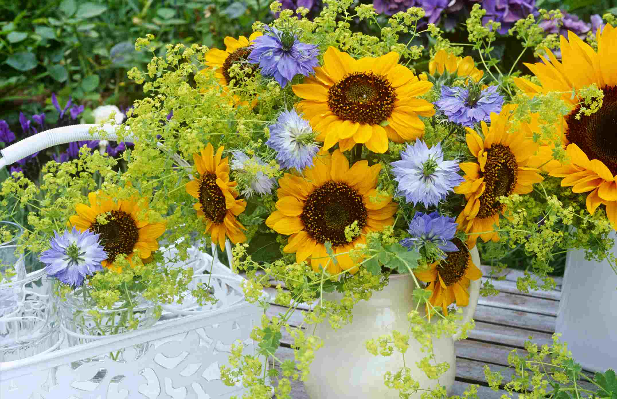 Nigella flowers potted with sunflowers