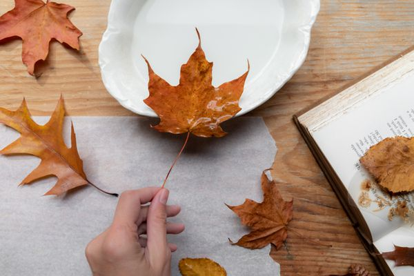 person preserving fall leaves