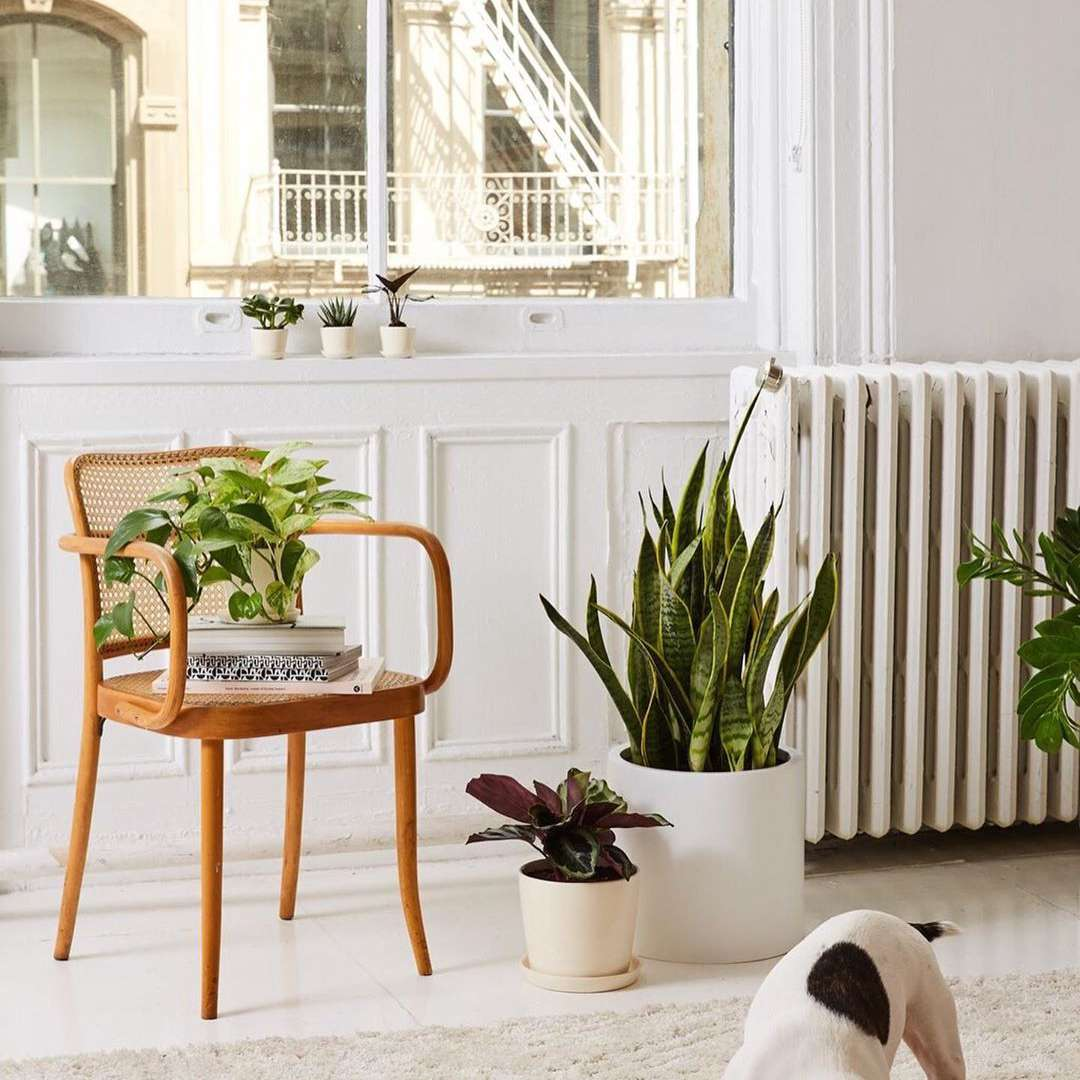 Plants in a home and a dog