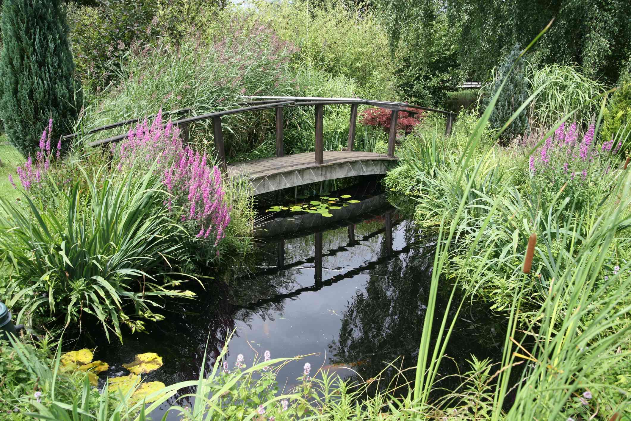 Hermoso jardín acuático