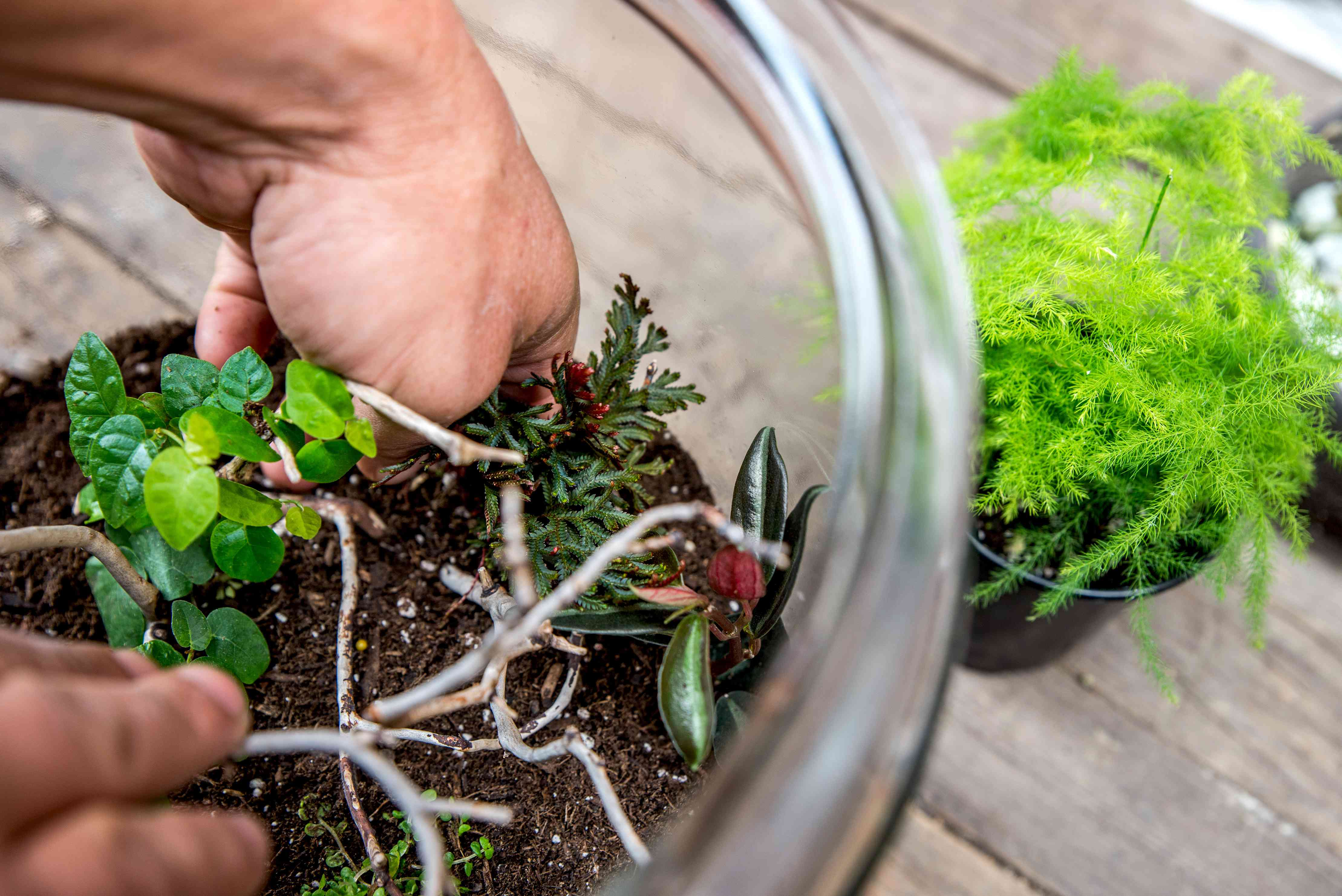 adding plants to the terrarium